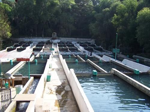 Parque eco tur stico de san miguel regla for Como criar truchas en estanques